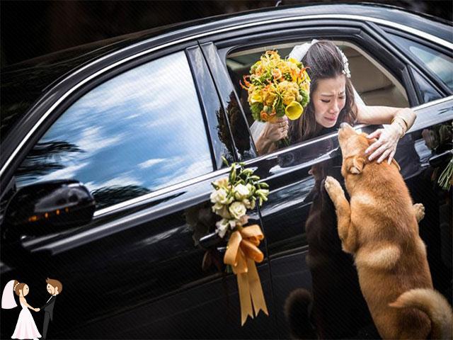 Hình ảnh minh họa khoảnh khắc xúc động trong đám cưới